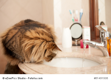 Cat On The Washbasin